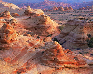 Petrified sand dunes with eroded sandstone at sunset, Paria Canyon-Vermilion Cliffs Wilderness, Arizona, USA  -  Jack Dykinga