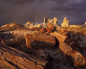 Petrified logs and eroded clay formations, Blue Mesa, Petrified Forest NP, Arizona, USA at sunset with storm clouds behind  -  Jack Dykinga
