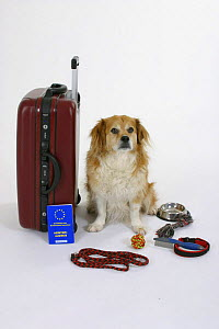 Domestic dog, Mixed Breed Dog next to suitcase with vaccination card - Petra Wegner