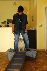 Domestic dog, Cairn Terrier having physiotherapy, balance practice  -  Petra Wegner