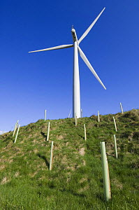 A 2.3 megawatt wind turbine surrounded by newly planted hardwood trees, Scotland UK. May 2006 - Niall Benvie