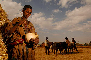 Amara woman preparing traditional product to protect against flies, North Ethiopia, 2006 - Laurent Geslin
