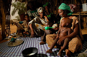 Fulani woman feeding her grandchildren with milk, north Senegal, West Africa, 2005  -  Laurent Geslin