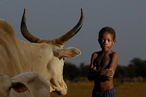 Fulani boy with cattle, North Senegal, West Africa, 2005  -  Laurent Geslin