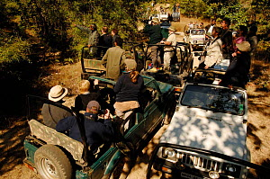 Large number of tourists in vehicles looking for a Tiger, Bandhavgarh NP,  Madhya Pradesh, India 2006 - Laurent Geslin