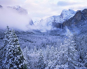Snow covered coniferous forest with low clouds and Bridalveil Falls in the distance, Yosemite National Park, California - Jack Dykinga