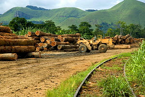 Tropical hardwood timber ready to be loaded onto railway wagons for transporting to the coast (for shipping or processing), Nr Lope forest, Gabon, 2004  -  Ben Osborne