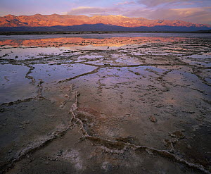 Salt crystal formations in partially crystalised salty lake, Panamint Range in distance with dawn light reflected in water, Death Valley National Park, California  -  Jack Dykinga