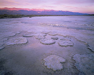 Salt formations on salt pan with Panamint Range lit by dawn light, Death Valley National Park, California  -  Jack Dykinga