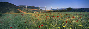 The viaduct of Millau spanning the Gorge du Tarn with poppies in the fields, Aveyron, Midi-Pyr�n�es, France  -  David Noton
