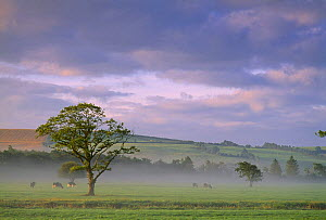 Misty morning nr Cork, Co Cork, Ireland  -  David Noton