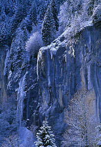 Detail of snow and ice on firs and mountain, Lauterbrunnen, Switzerland - David Noton