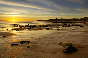 Dunstanburgh Castle and Embleton Beach at dawn, Northumbria, England, UK  -  David Noton