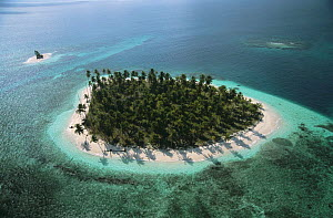 Aerial view of island with Coconut palm trees, San Blas Islands, Caribbean coast, Panama 2006  -  Michael Pitts
