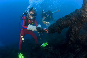 Diver Bud Turpin shapes erupting pillow lava by hand to form underwater lava sculptures at ocean entry from Kilauea Volcano, Hawaii Island, while son Shane Turpin shoots video  Model released MR 381,... - Doug Perrine