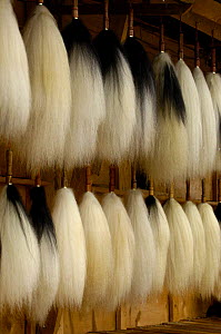 Yak tails for sale - the hair is used for making caligraphy brushes, Zhongdian, Yunnan Province, China   2006 - Pete Oxford