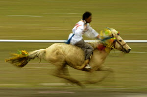 Horse galloping at the Horse Racing Festival or 'Heavenly Steed Festival' which takes place on the 5th and 6th days of the fifth lunar month. Zhongdian, Deqin Tibetan Autonymous Prefecture, Yunnan Pro...  -  Pete Oxford