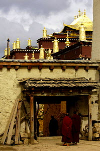 Monks at Songzhanling Monastery - a Yellow Hat Tibetan sect monastery - founded in the 17th century. Zhongdian, Deqin Tibetan Autonymous Prefecture, Yunnan Province, China 2006  -  Pete Oxford