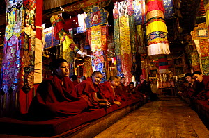 Buddhist monks during ceremony in Songzhanling Monastery. Zhongdian, Deqin Tibetan Autonymous Prefecture, Yunnan Province, China 2006  -  Pete Oxford