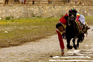 Horse and rider competing in Grabbing scarves event at the Horse Racing Festival or 'Heavenly Steed Festival'. Zhongdian, Deqin Tibetan Autonymous Prefecture, Yunnan Province, China 2006 - Pete Oxford
