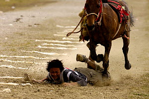 Rider falling off horse while competing in Grabbing scarves event at the Horse Racing Festival or 'Heavenly Steed Festival'. Zhongdian, Deqin Tibetan Autonymous Prefecture, Yunnan Province, China  200... - Pete Oxford