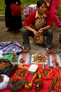 Tiger leg bones and feet with claws for sale as medicine by Tibetans in a market near Fugong, Yunnan Province, China 2006 - Pete Oxford