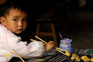 Chinese child eating with chopsticks, Yunnan Province, China 2006  -  Pete Oxford