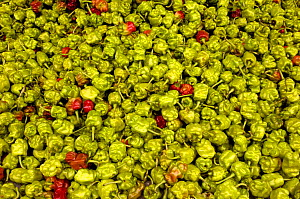 Green chilli peppers for sale in market, Yuanyang, Honghe Prefecture, Yunnan Province, China 2006 - Pete Oxford