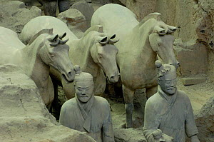 Close up of Terracotta Army Warriors and Horses at the Mausoleum of Qin Shi Huang. Pit number one. Xi'an, Shaanxi Province, China 2006  -  Pete Oxford