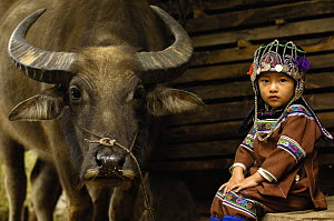 Hani child in traditional costume sitting beside domesticated water buffalo used for ploughing the rice paddies. Hani Ethnic minority people. Yuanyang, Honghe Prefecture, Yunnan Province, China 2006  -  Pete Oxford