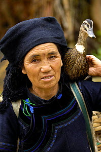 Hani woman carrying a domestic duck on her shoulder. Hani Ethnic minority people. Yuanyang, Honghe Prefecture, Yunnan Province, China 2006  -  Pete Oxford