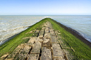 Breakwater covered in green seaweed (Cladophora rupestris) along the North Sea coast, Belgium  -  Philippe Clement