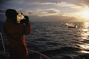 Doug Allan filming Killer whales surfacing at sunset for BBC NHU 'The Blue Planet'. Tysfjord, Norway, 1997  -  Martha Holmes