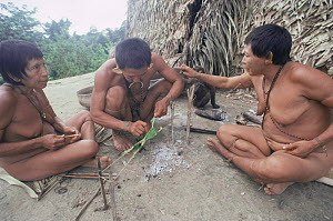 Group of Matis hunters using poison arrow frog to annoint their arrows for hunting, facial decorations mimic jaguar, Amazonia, Brazil  -  Nick Gordon