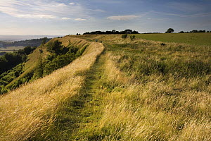 Iron age hill fort at Uley Bury on the Cotswold escarpment, Gloucestershire, England  -  Nick Turner
