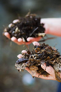 Two hands holding two different types of home made compost at the Centre for Alternative Technology, Machynlleth, Wales  -  Nick Turner