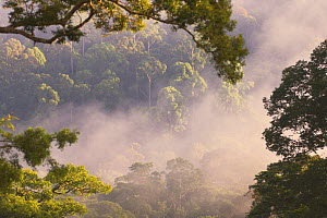 Early morning mist over the canopy, lowland rainforest, Danum Valley, Sabah, Borneo  -  Nick Garbutt