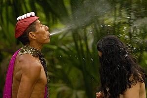 Colorado or Ts�chila Indian Shaman performs a cleansing ceremony by spraying a concoction of alcohol and medicinal herbs over his 'patient'.  Santo Domingo de los Colorados. Coastal ECUADOR. South Ame... - Pete Oxford