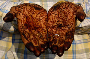 Rajasthani bridegroom's hands painted with henna, Pushkar, Rajasthan, India, 2006  -  Pete Oxford