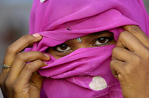 Hindu Woman looking out from inside her veil, (only married women wear veils) near Bharatpur. Rajasthan, India 2006  -  Pete Oxford