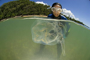 Snorkler looking at Box jellyfish {Chiropsalmus sp.} Queensland, Australia 2006 - Jurgen Freund