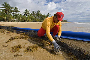Lifeguard removing Jellyfish from net, after clearing stinger-resistant enclosure, Queensland, Australia  Note - Surf Lifesaving Queensland have an effective policy of dragging nets through the water... - Jurgen Freund