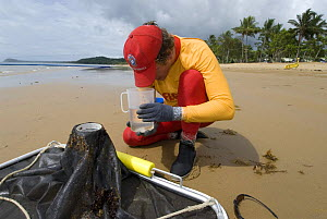 Lifeguard checking water sample for Irukandji and Box Jellyfish after drag-netting stinger-resistant enclosure, Queensland, Australia,  2006 - Jurgen Freund