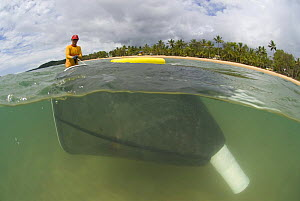 Lifeguard dragging net through stinger-resistant enclosure, checking for Irukandji and Box Jellyfish, Queensland, Australia  2006 - Jurgen Freund