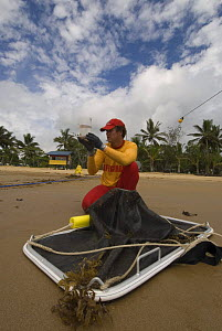 Lifeguard checking water sample for Irukandji and Box Jellyfish after drag-netting stinger-resistant enclosure, Queensland, Australia  2006 - Jurgen Freund