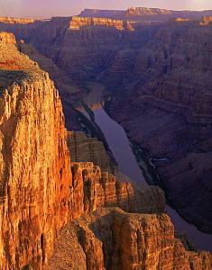 Quartermaster Canyon overlooking west into the Colorado River gorge at dawn, Grand Canyon West Hualapai Indian Reserve, Mojave Desert, Arizona, USA  -  Jack Dykinga