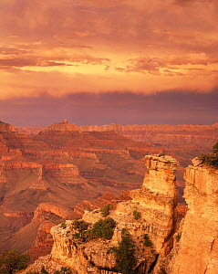 Sunset at Yaki Point on the South Rim with stratified rim rocks and minute storm clouds inside the canyon below, Grand Canyon National Park, Arizona, USA.  -  Jack Dykinga