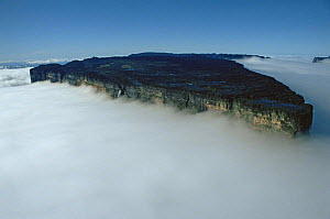 Aerial view of Mount Roraima shrouded in cloud, Venezuela  -  NEIL NIGHTINGALE