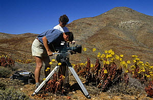 "Camerman Richard Ganniclifft filming Aloe plants on location in South Africa for BBC television series ""Private Life of Plants"", early 1990s  -  NEIL NIGHTINGALE"