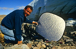 "Cameraman Gavin Thurston holding reflector during  filming tiny arctic flowers on location on Ellesmere Island in the Canadian arctic, for BBC NHU's series ""Private Life of Plants"" 1990s - NEIL NIGHTINGALE"